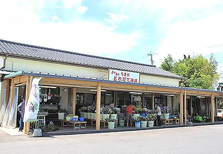 よかよかうまか生産物直売所とれたて市場嘉島店の写真