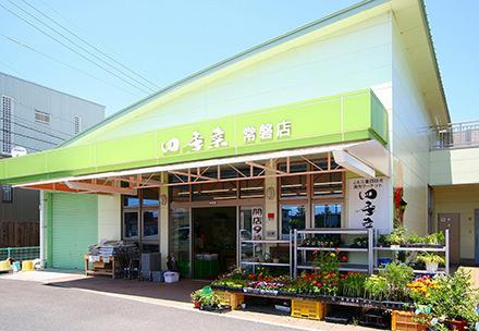 四季菜 常磐店
