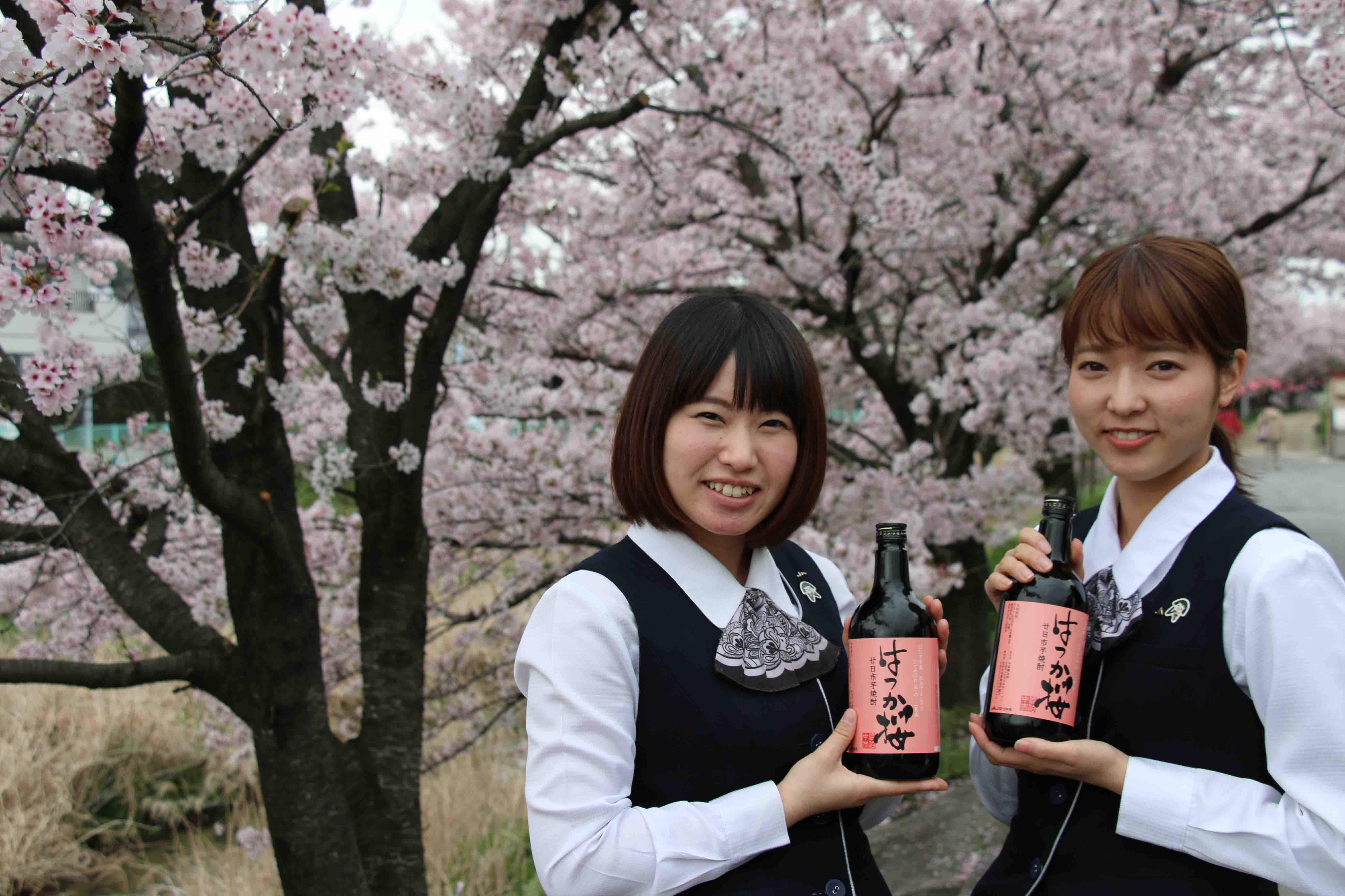 廿日市芋焼酎 はつか桜