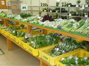 農家直送の新鮮な野菜