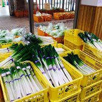 鳥取県全域から集まる新鮮な野菜