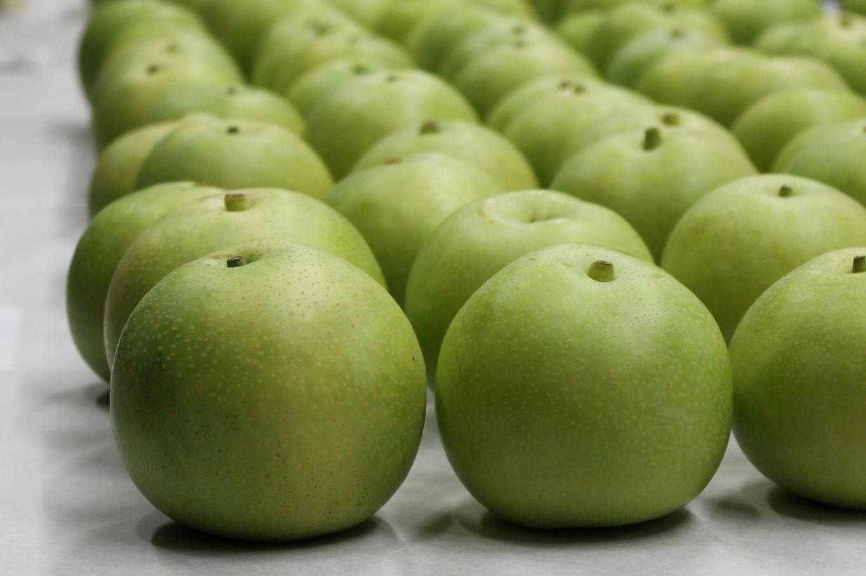 梨の王様・二十世紀梨